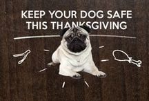 """Take a """"Paws"""" to be Thankful / With the holiday season fast approaching, there's so much to be thankful for. Bil-Jac encourages you to take a """"paws"""" to be thankful this season, especially for those 4-legged best friends of ours!"""