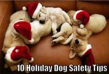 Santa's Little Helpers / The holiday season is all about spending time with family and friends. As we get caught up in the hustle and bustle, decorating, and parties, it's important to be sure we are keeping our pets safe through it all, while including them in on the fun. Here's our collection of Pet tips, tricks and gift ideas!