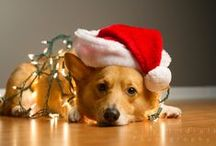 Dog Holiday Cards / A collection of super cute and funny best friend holiday photos that in fact can be used for holiday cards, enjoy or shared with other dog lovers! Helping to spread the holiday cheer from Bil-Jac to you!