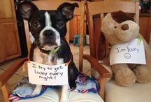 Dogs with Signs / Nothing brings a smile to your face faster than a cute dog with sign! Take a moment to share these pins with someone who deserves a smile. Bil-Jac Dog Food loves dogs with signs!