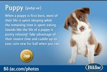 Puppy Bil-Jac Dog Contest / Who doesn't love puppies? Enter your puppy at http://www.bil-jac.com/photouploader.php for a chance to WIN some of the Best Tasting Bil-Jac DogFood!