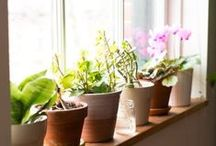 The Green Indoors:  Houseplant Decor, Tips, and Ideas