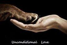 Dogs=ⓁⓄⓋⒺ❤ / by Chrissy Bassett