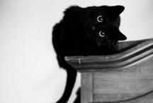 Cats Make the World Go Round