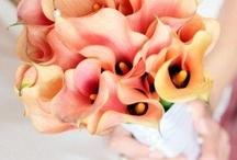 Calla Lily Wedding Theme / Calla Lily's are a beautiful choice as a wedding theme
