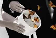 Butterfly Wedding Theme / The butterfly is beautiful and using it as a wedding theme adds all the beauty and uniqueness.