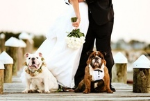 """""""Best Pet"""" ideas!  Add mans best friend to your special day. / Adding your special pet to your wedding is a great way to add all the family members!"""