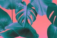 Tropical / Fashion , illustration , jewelry ,art , place , flowers