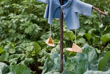 gardening and backyard  / by Pam Winn