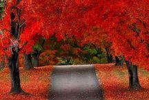 Fall/Thanksgiving/Halloween / by Stephanie Moon