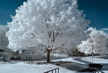 WINTER WONDERLAND / by Becky Perkins