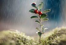 Nature | Rain & Drops