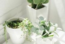 Green House / Plants Galore.