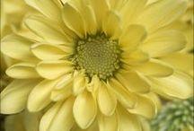 Fabulous Flowers / by Kristi Challenger