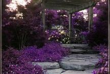 Gardens, outdoor living and more / Gardens are a way that we can let Mother Nature shine while using our own creative visions and ideas. Follow as I find more and more great gardens to help you create your special hideaway. / by Betty Chavez