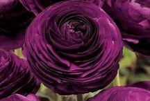 Flowers  / by Myriam Vidaly