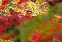 Fall Color / by Kristi Challenger