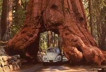 Road trip 2016 / A road trip around the west coast of the USA. As a professional baker I am hoping to sample lots and lots of delicious cakes! (But also lots of other local food). It has always been a dream to see the giant redwood forests and drive through one of the trees, I still find it hard to believe that these exist! I would love to spend time swimming in Lake Tahoe too, it looks like the most beautiful place on earth.