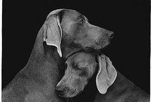dogs / by Liana Shelton