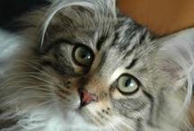 Precious Kitties / by Julie Adams