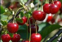 Very Cherry / by EziBuy
