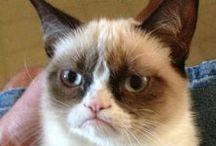 Grumpy Cat - aka Tardar Sauce!