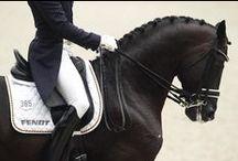 ♛ DREAM DRESSAGE HORSE / Lovely dressage horses