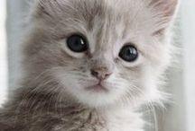 Kitten wishes