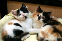 OMG! Kitties! MEWMEWMEW! / by Melissa Siaotong