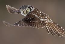 owls / by Patricia Kocka