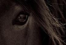 Horses / by Renée Demaras