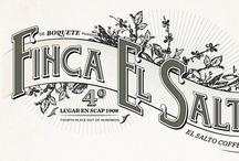 Typography / by Ashley Bella