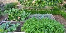 Urban & Suburban Homesteading / The best articles about gardening, self-sufficiency, and raising small animals (chickens and rabbits and goats, oh my!) and more. You CAN raise your own food and provide for your family - even if you don't live on a farm.