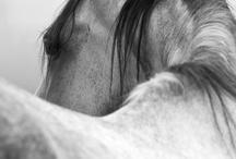 animals & love / ..tender.. / by jennys dreamroom