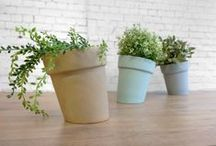 @^Home ||| green / plant&pot&bottle&basket&styling&water