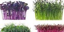 Kitchen ||| eat&veggie / vegetables