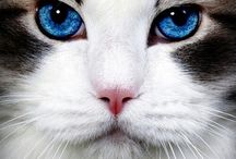 Beautiful Felines / by Sarah Fisher
