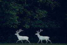 Wild & Free / by Ortolan