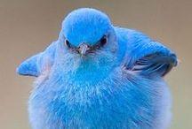 Beautiful Birds / So beautiful!