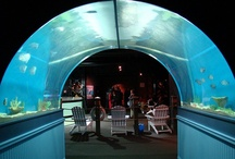 New and Notable / $2 billion in new tourism projects includes the new Horseshoe Casino Cleveland, the Greater Cleveland Aquarium, the Cleveland Medical Mart and Convention Center.  / by Destination Cleveland