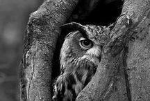 Owl Tattoo Ideas / by Juli-Ann Williams
