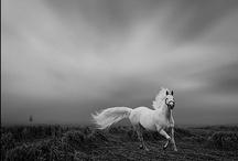 Chevaux / horses / by jujuliliette