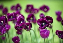 Flowers  / by Esmeralda Diaz