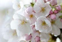 Spring Blossoms ♥⊰ ☂