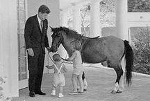 US Animal of Vermont Equine