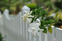 Flowers and White Fence
