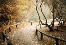 Fall Comes Softly