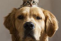 Furry friends:)