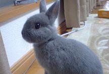 bunny lovin