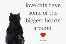 cat quotes / some lovely cat related quotes